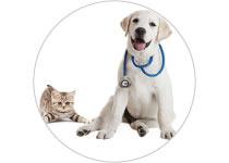 Veterinary